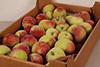 Яблоки Paulared 70+ новый урожай кг